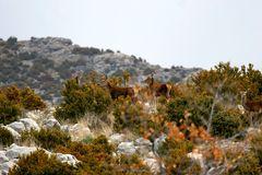 Nómadas del monte
