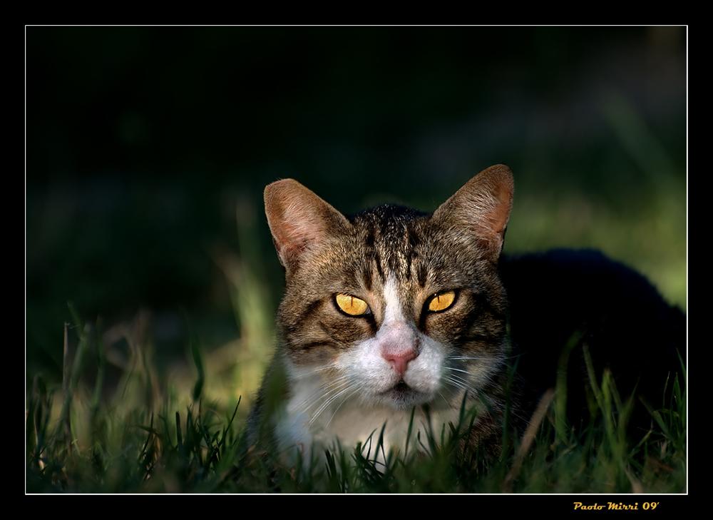 Non dire gatto...