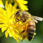 Non solo ape...