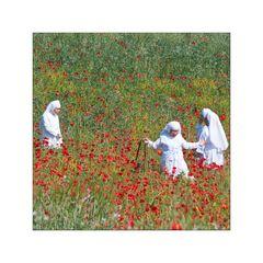 Nonnen im Mohnfeld