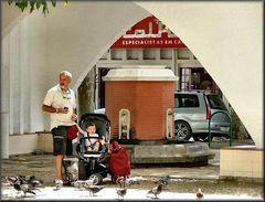 Nonno, guarda quanti colombi.