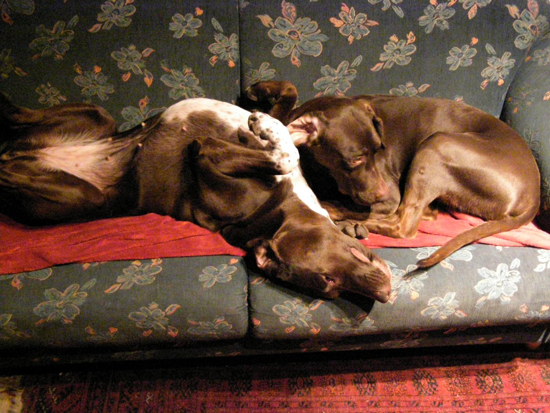 nora und Vera haben ein neues Sofa