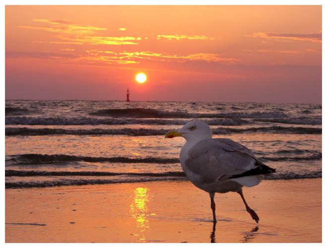 Norderney - Sonnenuntergang - Die Möwe auf einem Bein