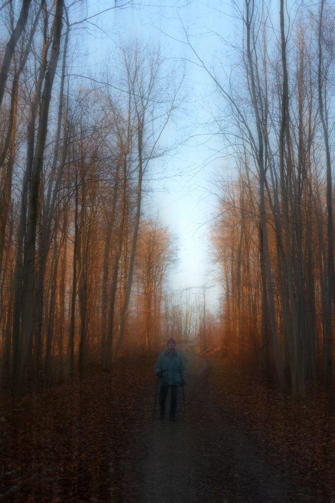 nordic walking -1-