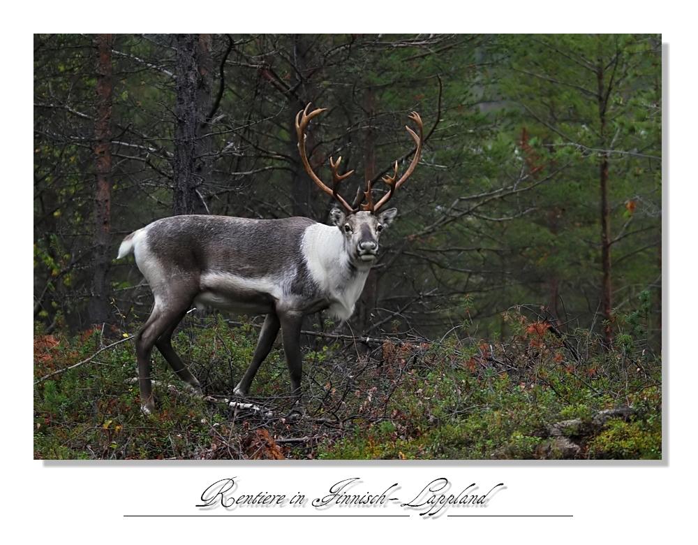 Nordland_2011_32