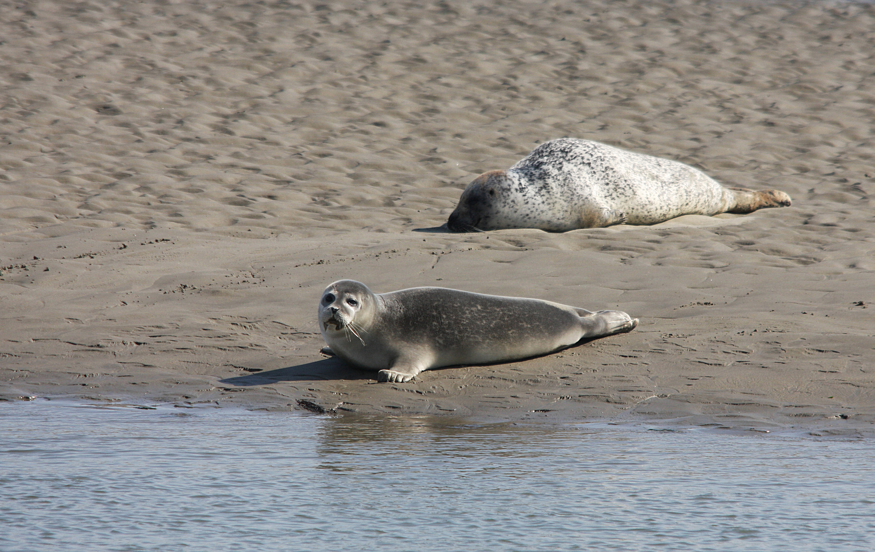 Nordsee 2012 - Seehundbänke Foto & Bild | deutschland, europe ...