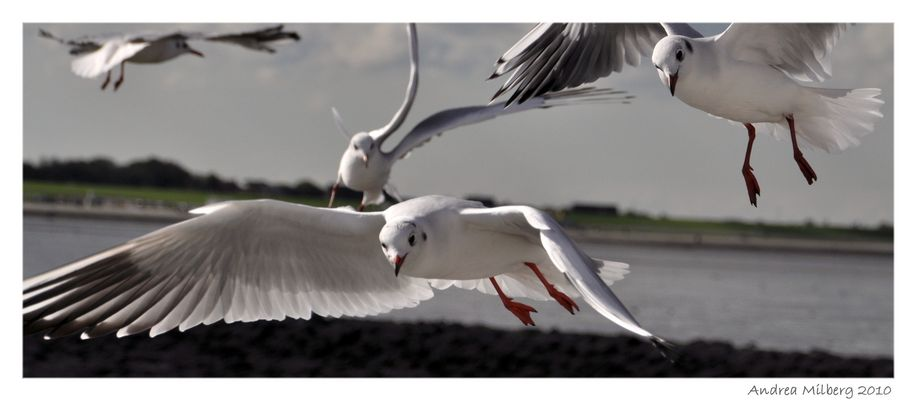 Möwen Nordsee