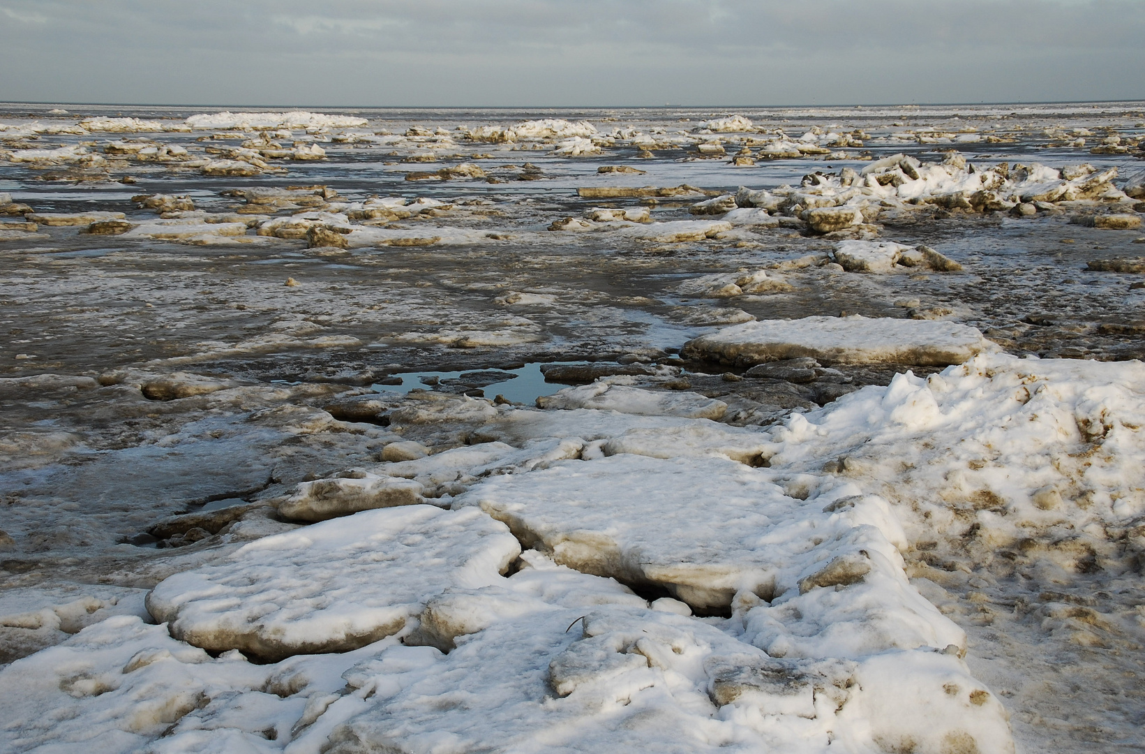 Nordseeschollen
