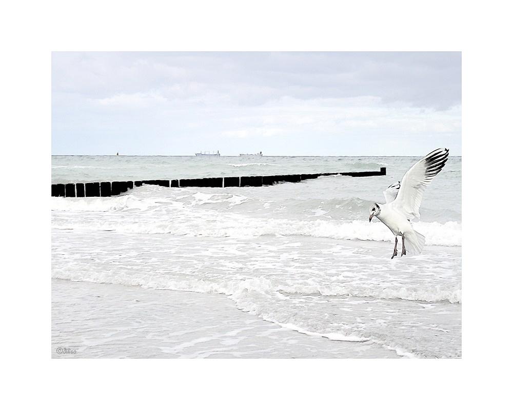 ~ Nordseewellen ~