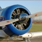North American Aviation T-6 Trainer