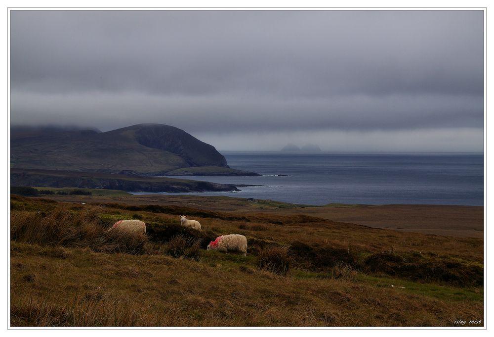 * North Mayo Coast *