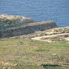 North-Western coast of the Island of Gozo