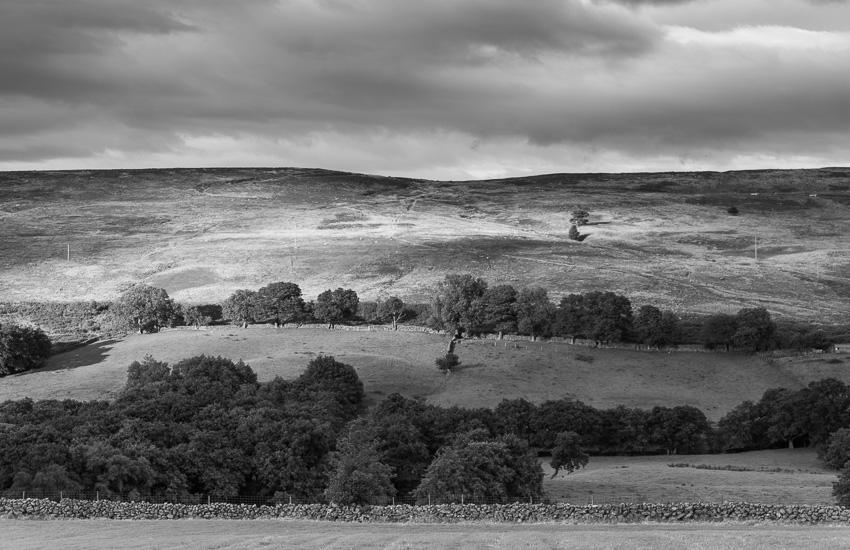 North York Moors III