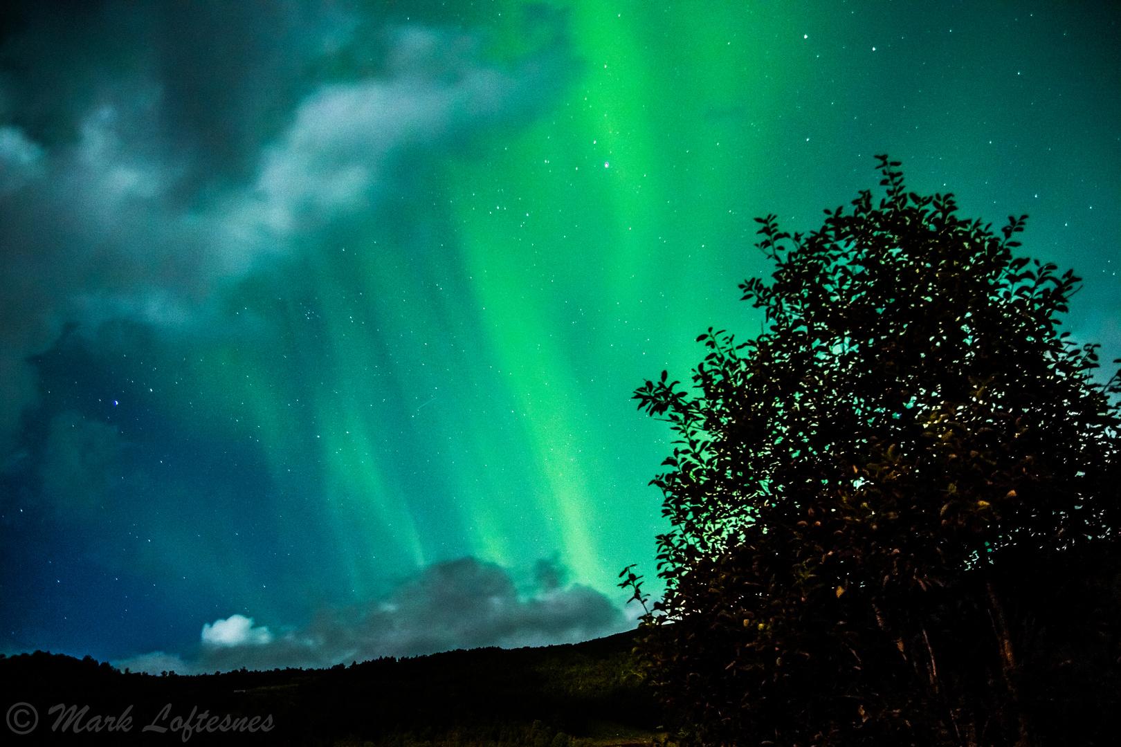 Northern lights over tree