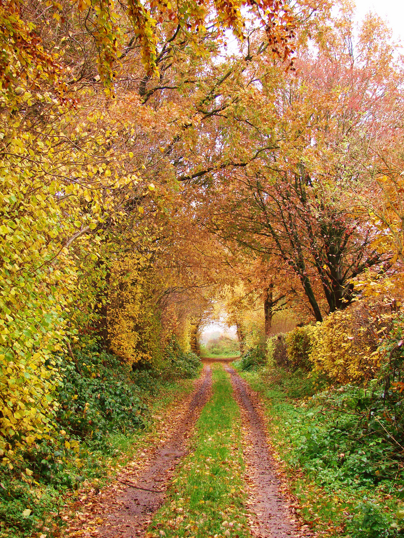 Nortorf u. U. im Herbst