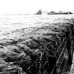 Nostalgia delle Orcadi..dove è sovrano il vento!