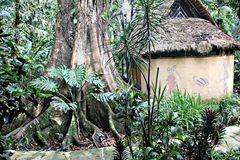 notre hôtel-case dans la jungle