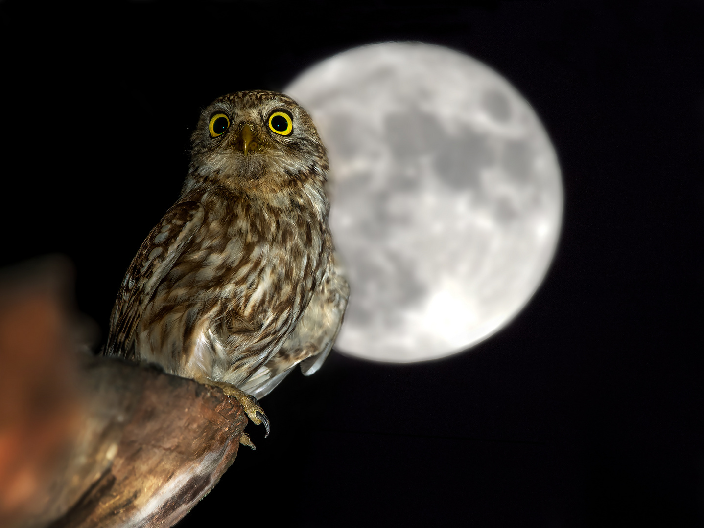 Notte di Luna Piena.....