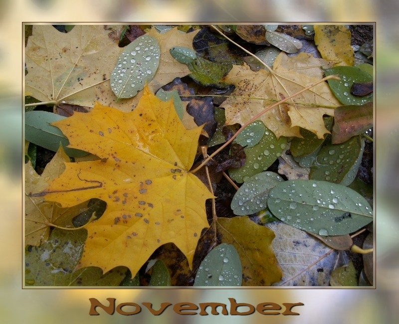 - November -