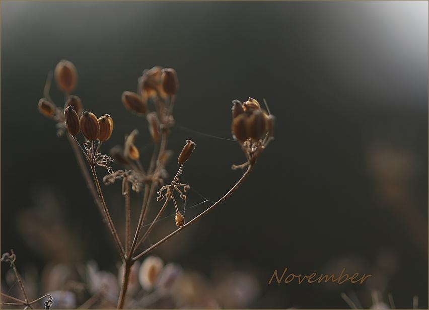 ...November...