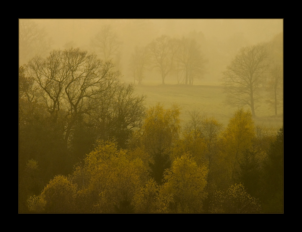 "November-Betrübnis nistet in den Ästen... - (1. der Serie ""November-Nebel"")"