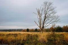 November Heide 5469