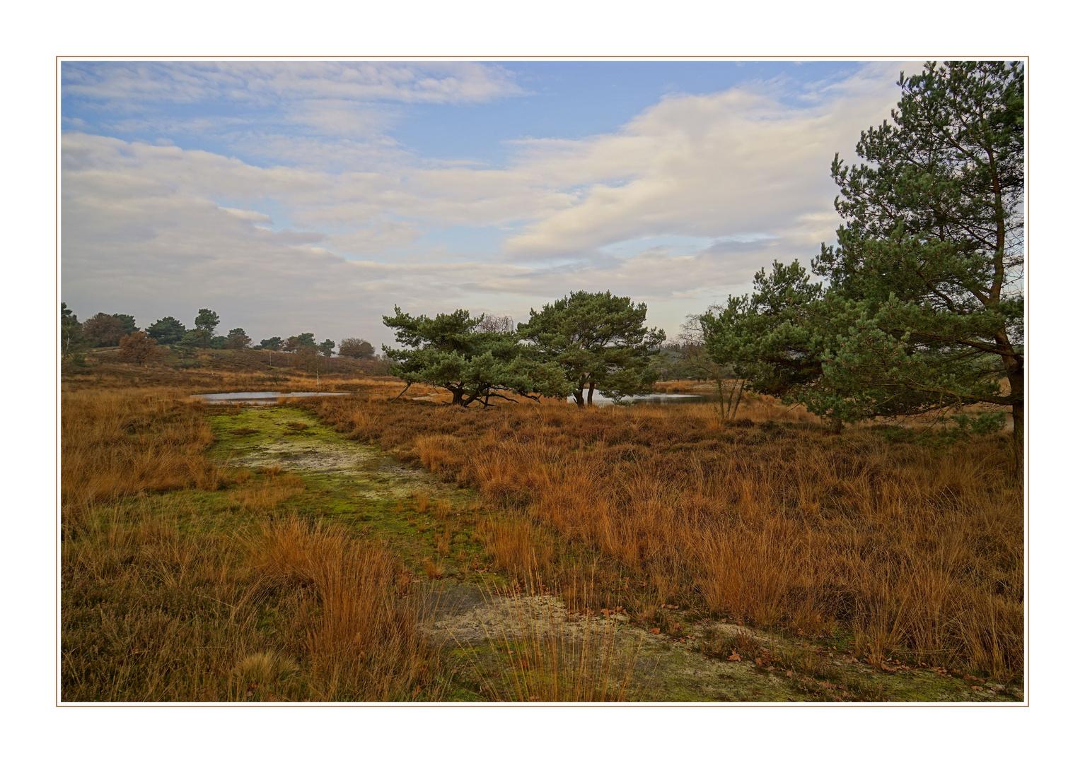 """""""November Heide"""""""