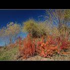 November Herbst - 2