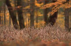 November - Herbst