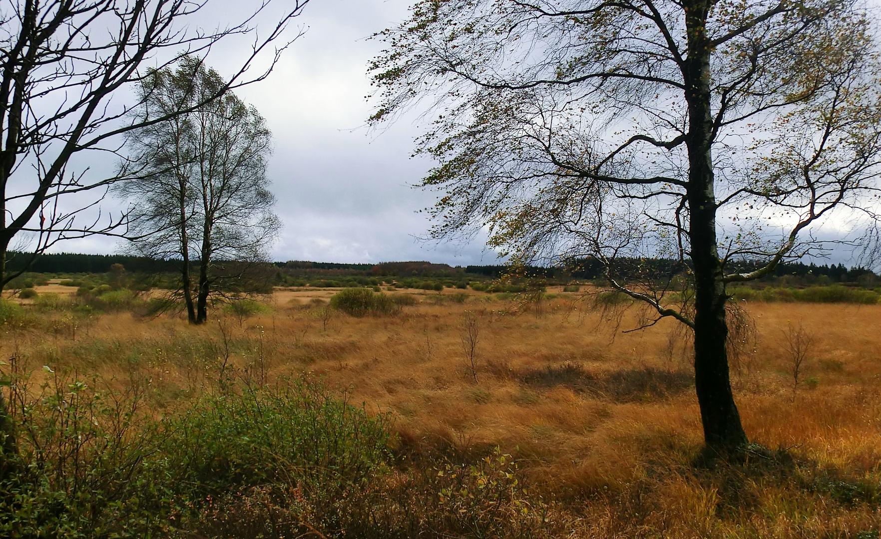 November im Hochmoor...