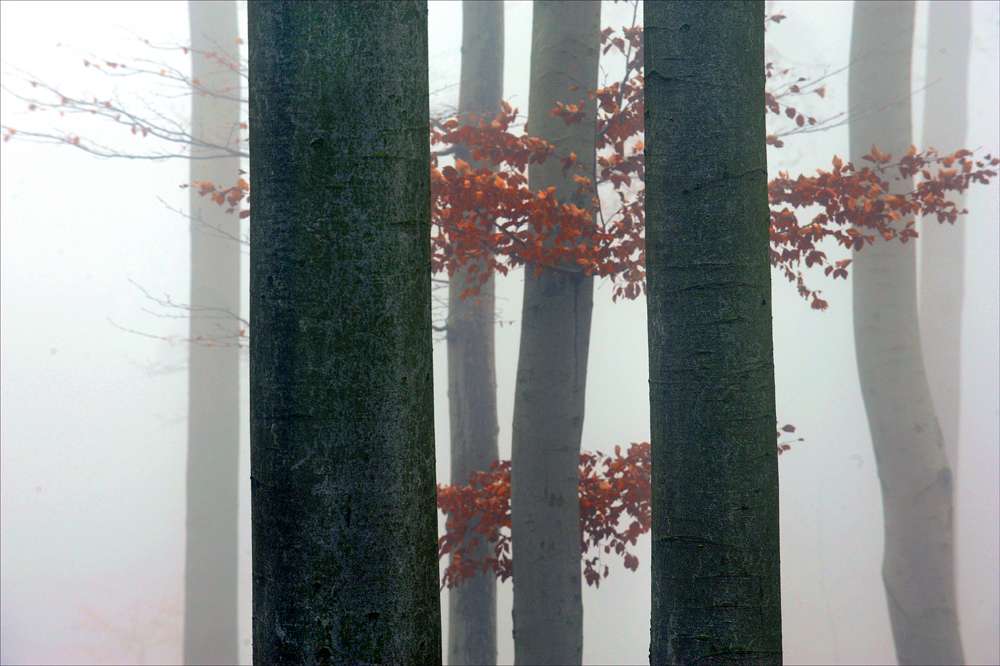 November im Wald