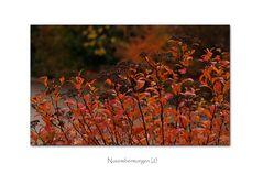 November-Impression