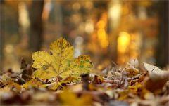 November-Leuchten