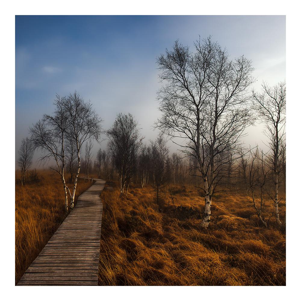 November-Licht 4