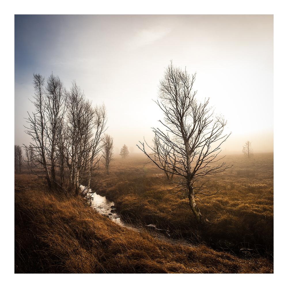 November-Licht