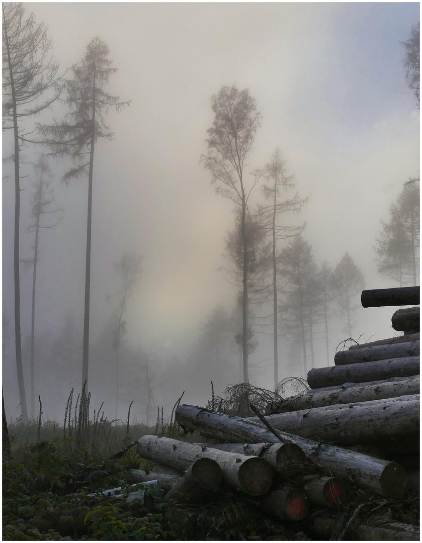 November-Nebel- 2