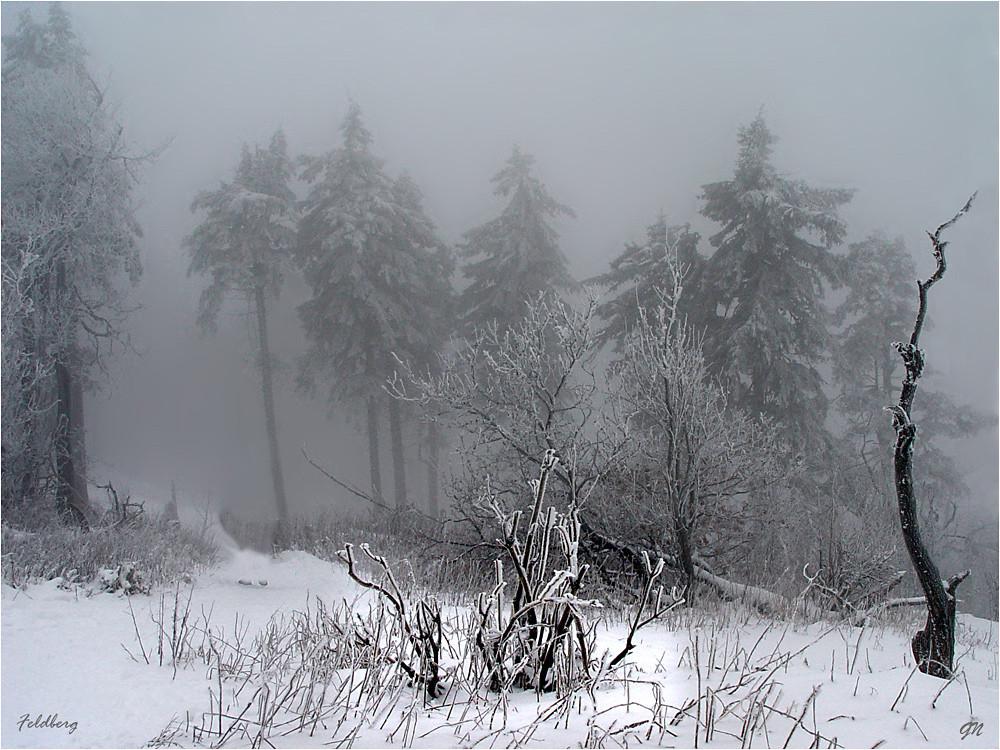November - Nebel, Eis und Schnee -