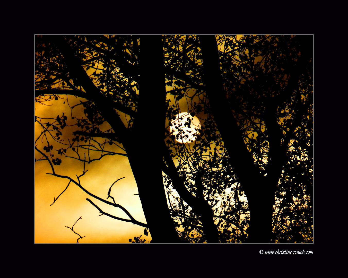 November Sonne...