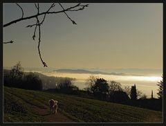 November-Sonnen-Nebel