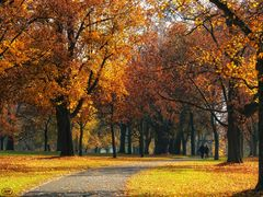 November-Spaziergang...