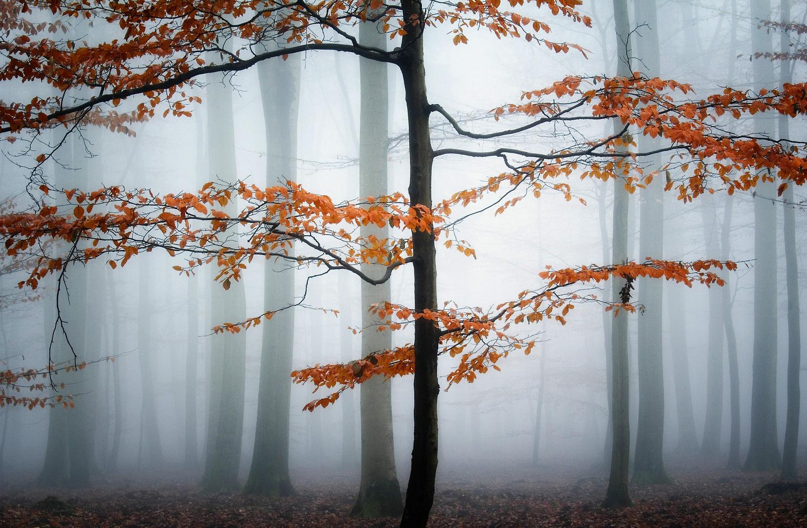 November-Stimmung