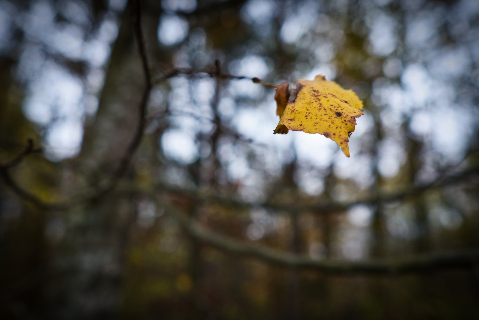 November-Tristesse