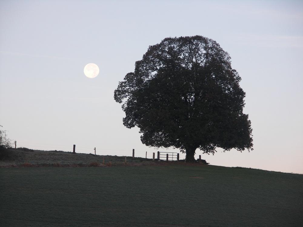 November Vollmond am Morgen