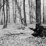 November-Wald