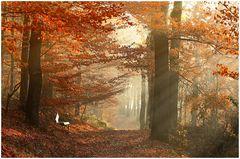 November Wald