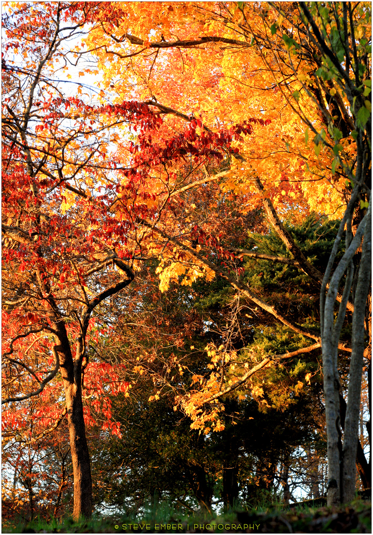 November Woods - No.2