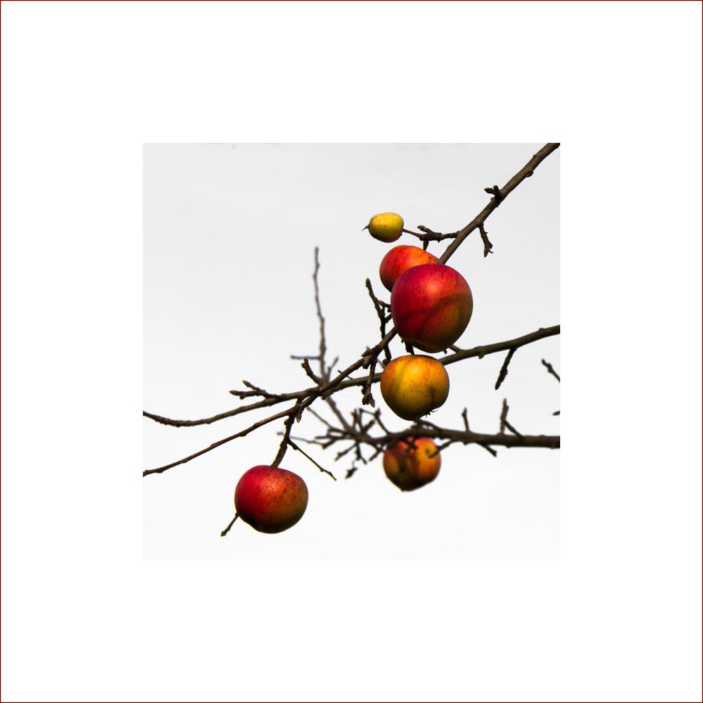November.äpfel