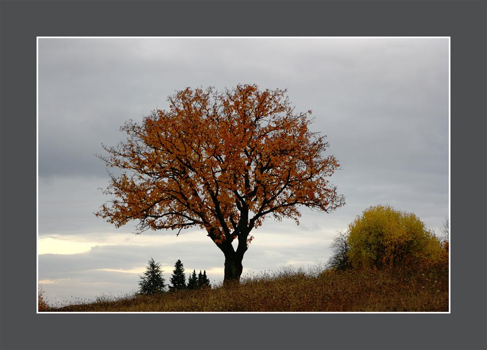 Novemberbaum
