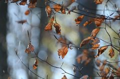 Novemberblick