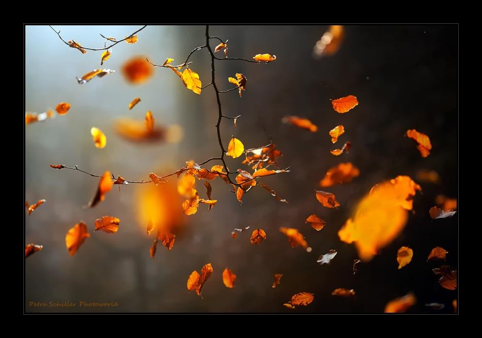 °° Novembergedanken °°